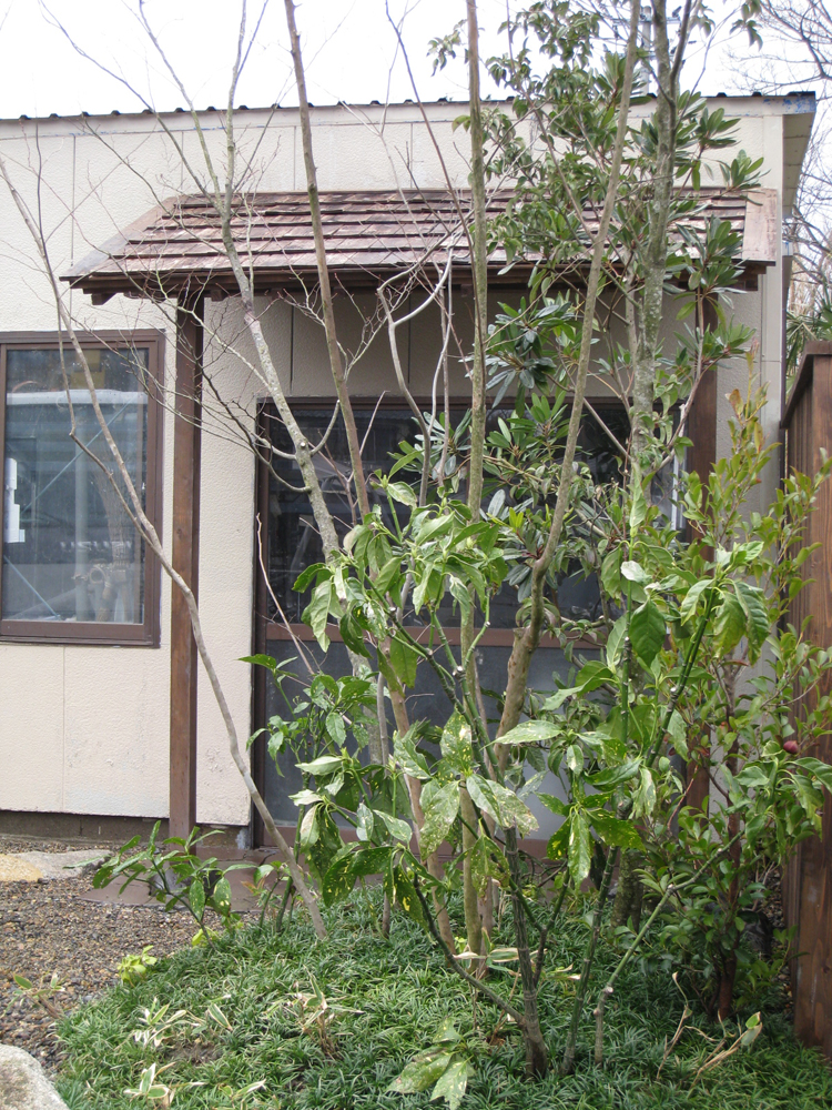 自宅の庭2 12b_works7_2