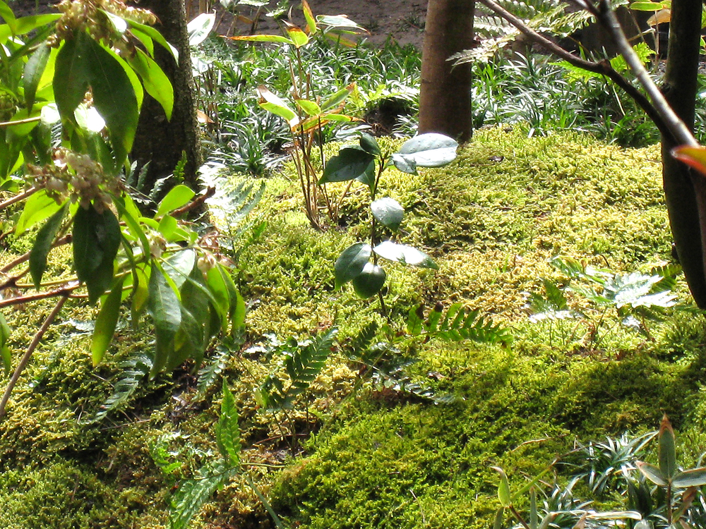 自宅の庭1 12b_works8_10