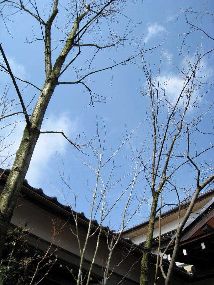 自宅の庭1 12b_works8_3